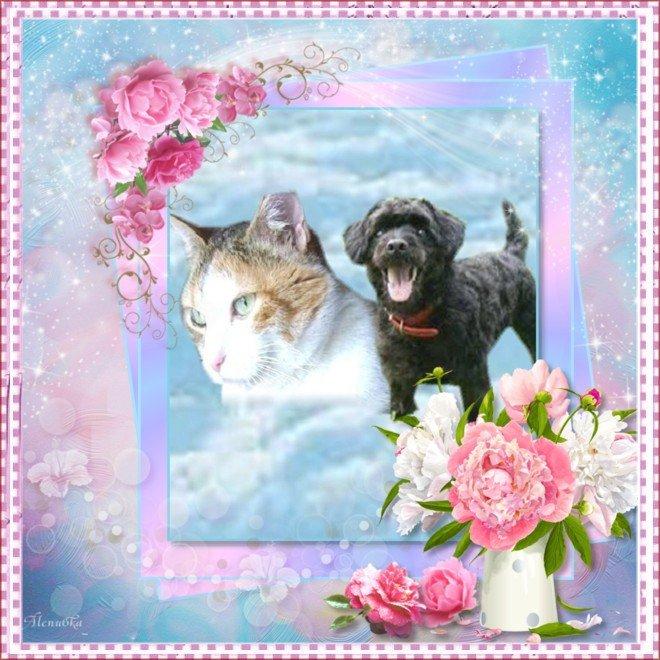 An den Beitrag angehängtes Bild: http://img24.dreamies.de/img/114/b/j0uv6fc1r58.jpg