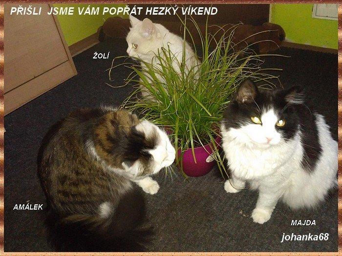 An den Beitrag angehängtes Bild: http://img24.dreamies.de/img/377/b/j8o58u5baou.jpg