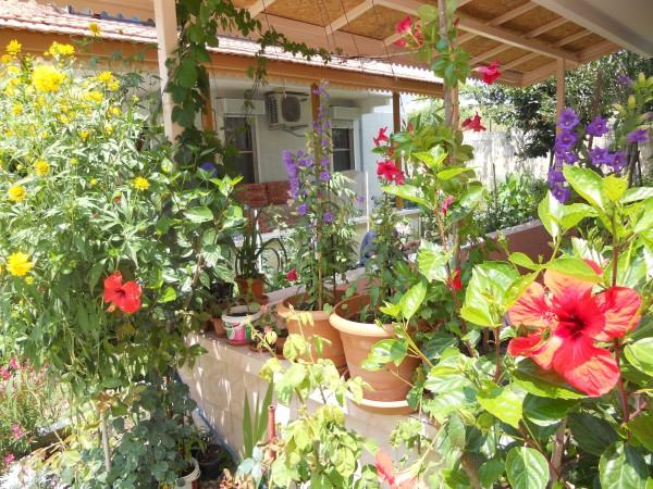 Cvijeće oko kuće  - Page 3 4e873gg44p4