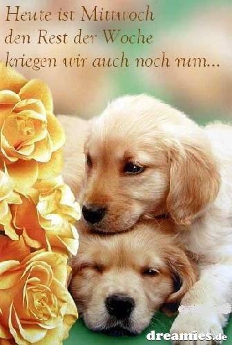An den Beitrag angehängtes Bild: http://img24.dreamies.de/img/873/b/dk8auxsvvou.jpg