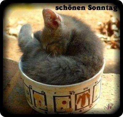 An den Beitrag angehängtes Bild: http://img24.dreamies.de/img/966/b/9he43i8y94z.jpg