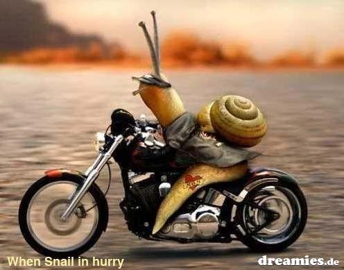 Gluckwunsche zum 60 geburtstag mann motorradfahrer
