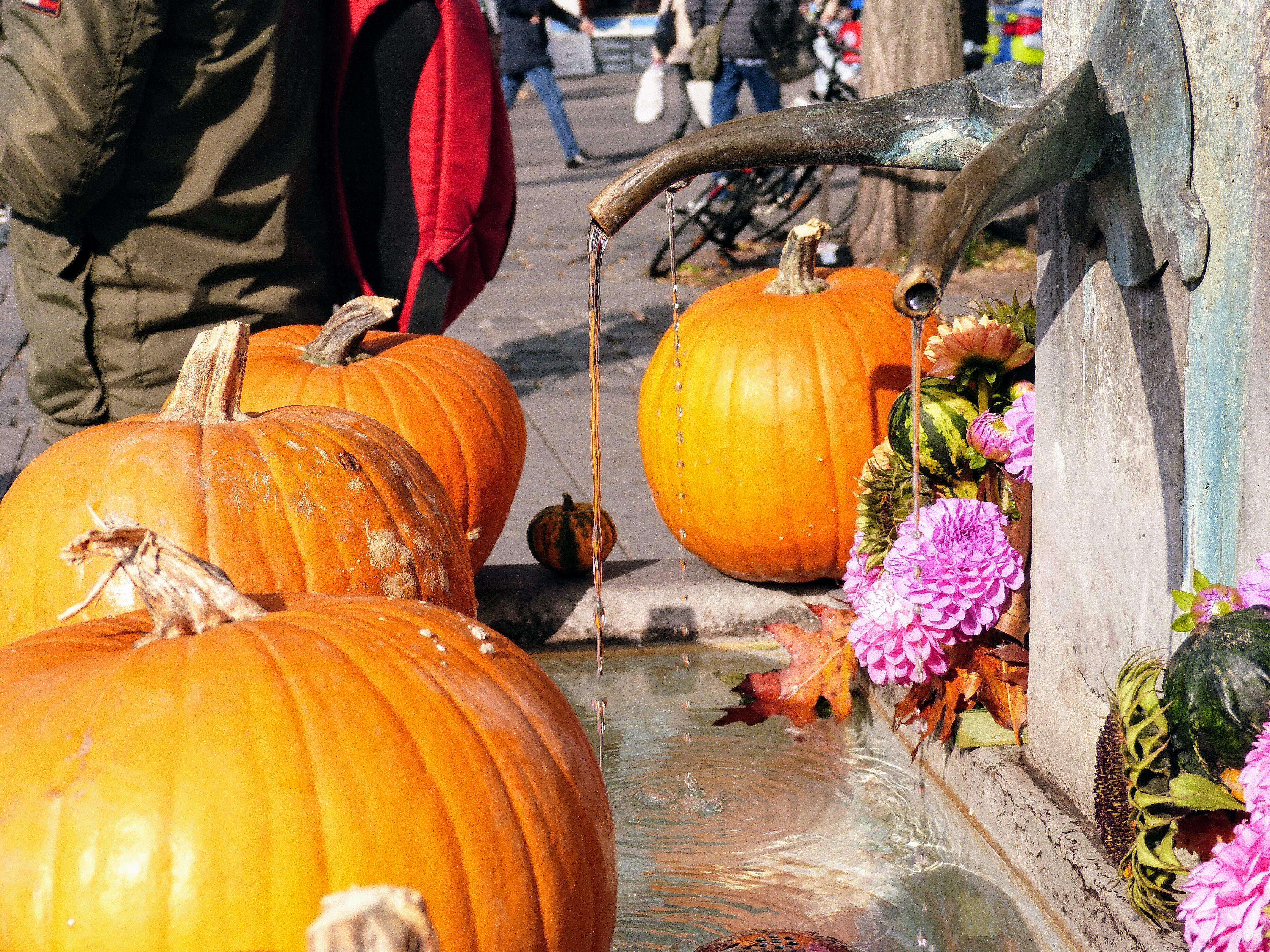 Sonntagsfreude: letzte Oktoberwoche